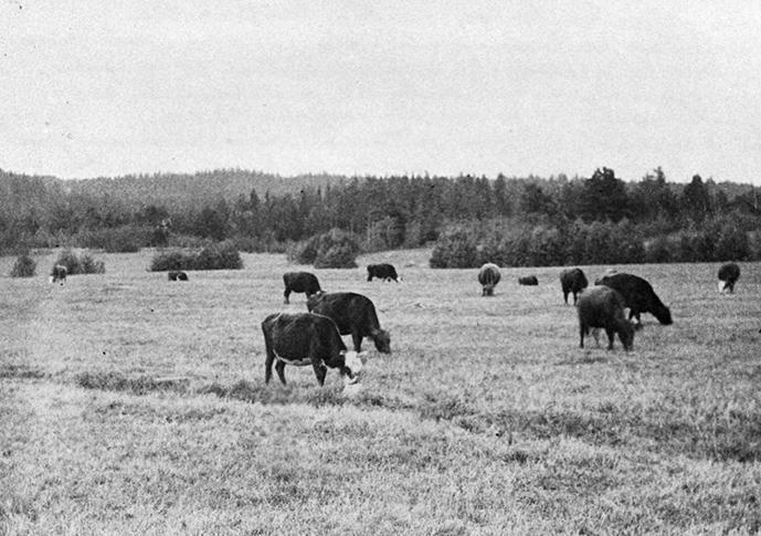 Kurjalan karjaa