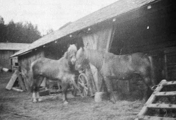 Aakalan hevoset