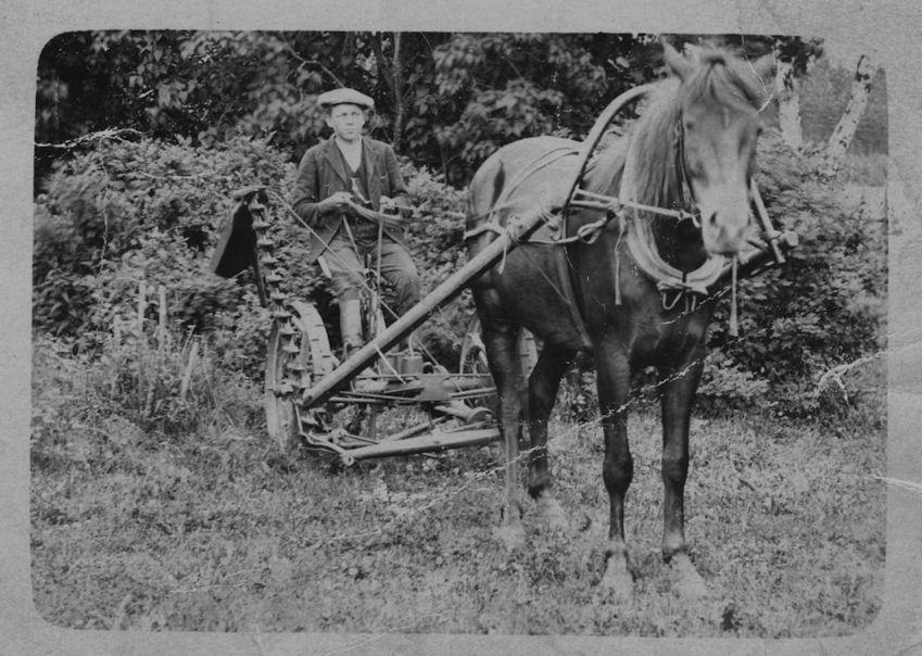 Hevonen ja niittokone 1925