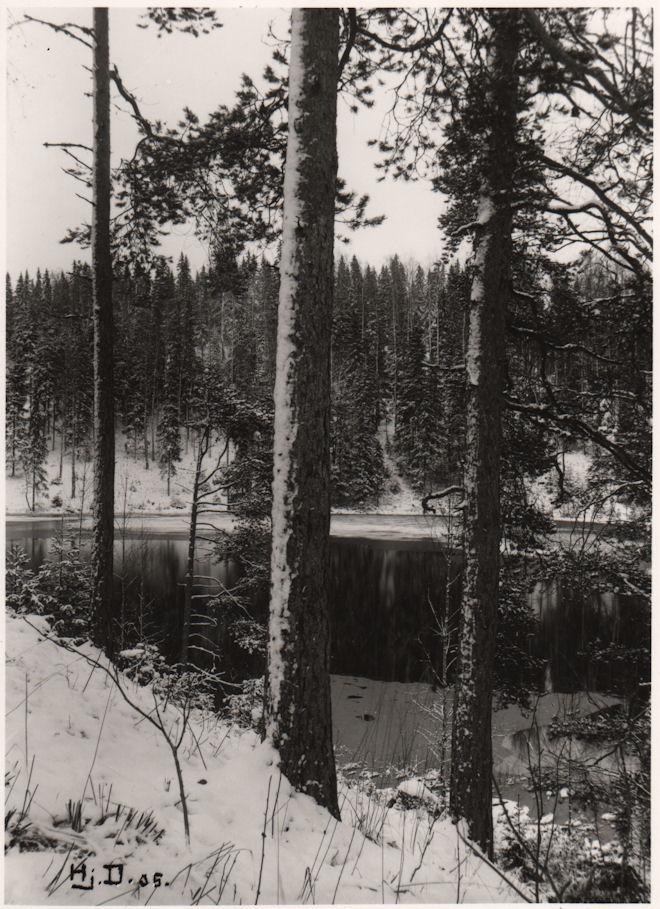 Palomaa Vähäjärveltä 1905
