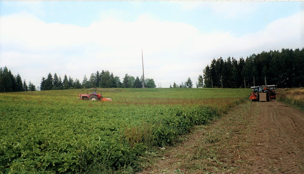 Varhaisperunapelto, Kaukinen v. 2004