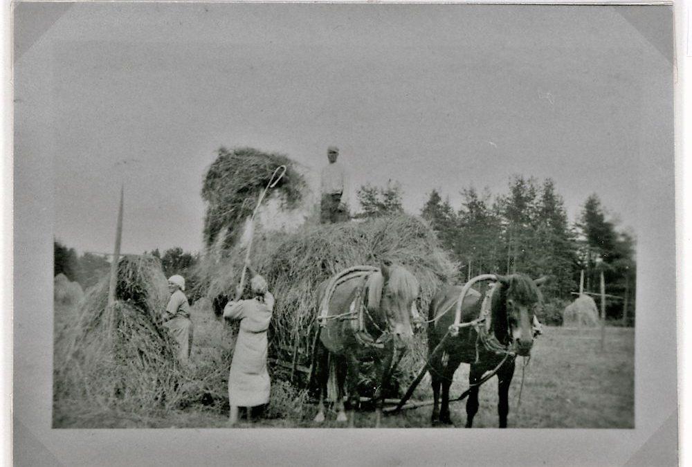 Kuivaheinän ajoa Tuloiselan pelloilla heinäkuussa 1937, Putula