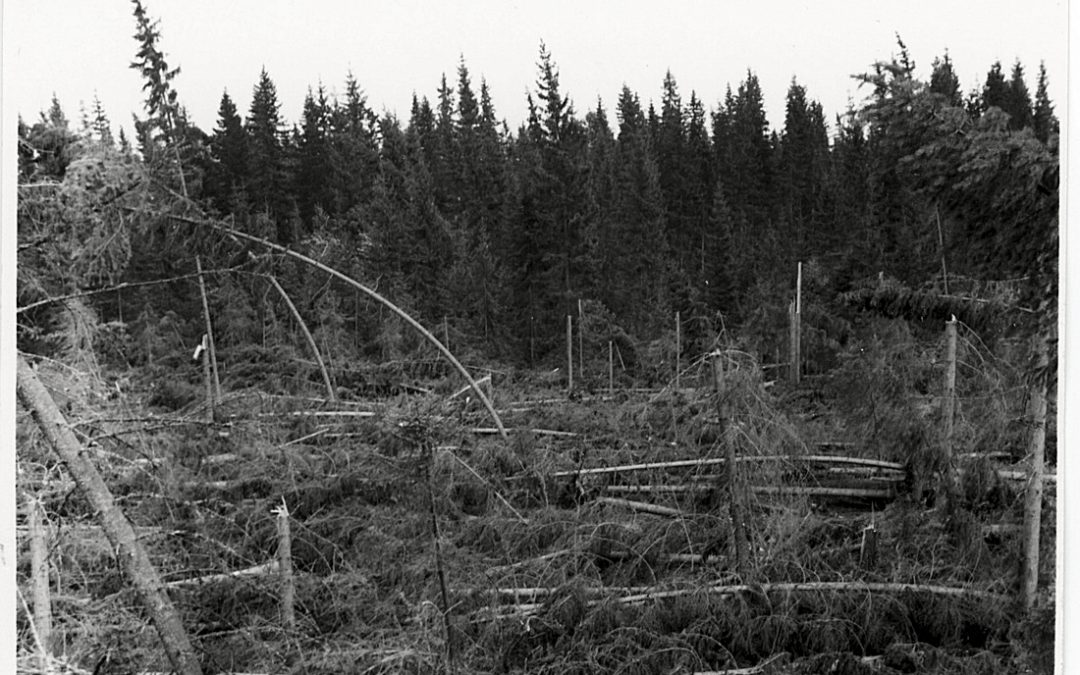 Maire-myrskyn tuhoja Palomaassa v. 1961