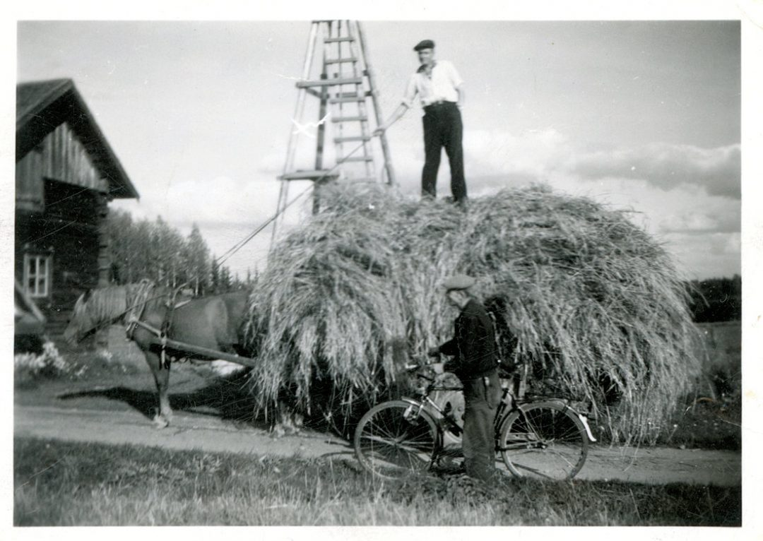 Heinäkuorman kuljetusta hevosella 1940-luvun lopulla Palomaassa