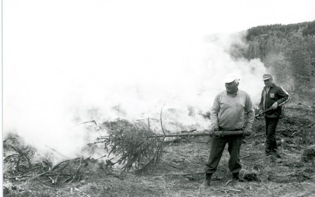 Metsän kulotusta