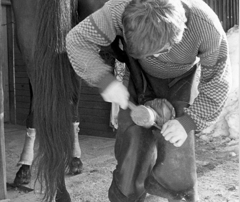 Hevosen kengitystä
